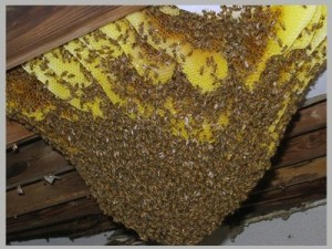 Bees – It's A Love-Hate Relationship