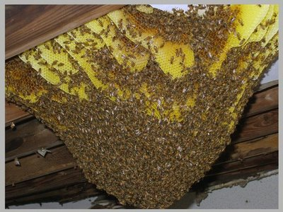 Bees It S A Love Hate Relationship Ambassador Pest Control
