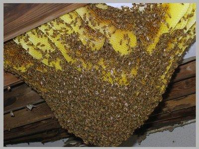 Bees It S A Love Hate Relationship Ambassador Pest