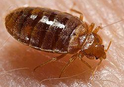 bed bugs removal services by ambassador pest control in phoenix arizona
