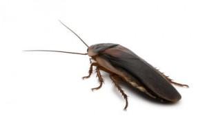 roach extermination services by ambassador pest control