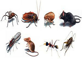 pest control gilbert services by ambassador pest control in phoenix arizona